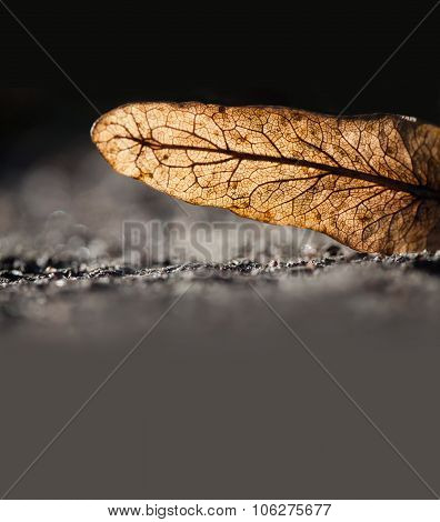 Skeleton, transparent brown leaf with organic capillary tree pattern.