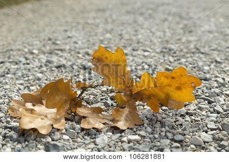 Leaf on gravel