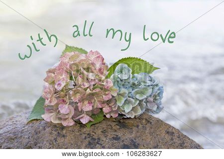 Hydrangea Blossoms At A Beach Stone, Farewell Scene