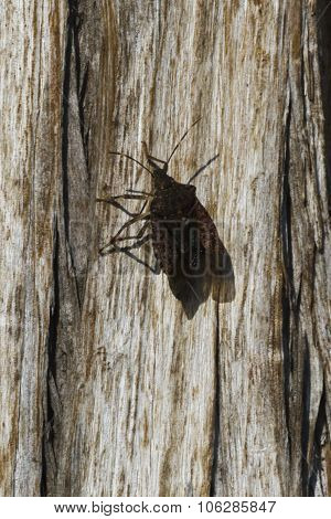 Bedbug On Tree Trunk