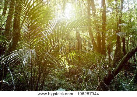 Sunlight shining in tropical jungle