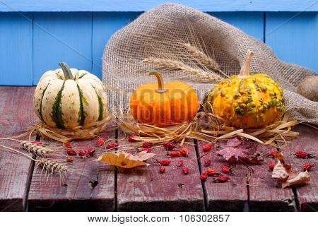 Pumpkins And A Dogrose On A Wooden Table