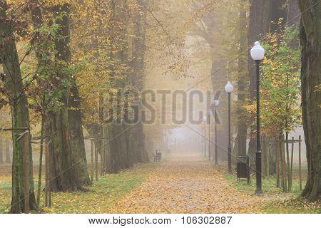 Autumn in the park.