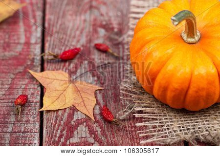 Pumpkins, Autumn Leaves And A Dogrose