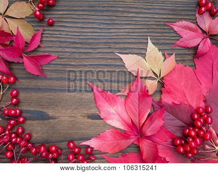 Red Viburnum Berries And Fall Leaves Frame