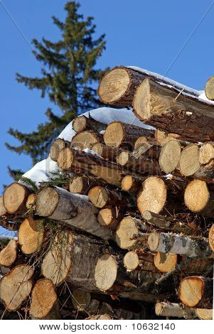Stacked Logs With A Norway Spruce Tree
