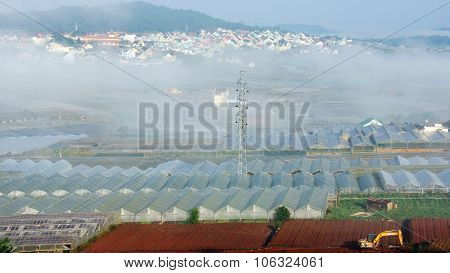 Floriculture Industry, Greenhouse, Effect, Dalat, Development