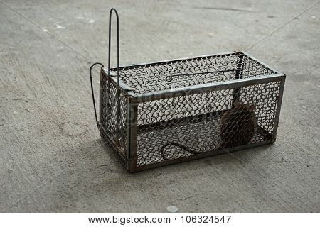 A Cage To Trap Rat