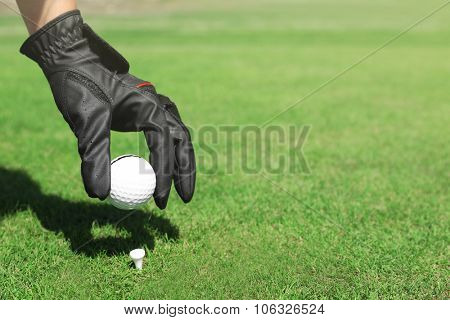 Hand in black glove with golf ball on green grass background