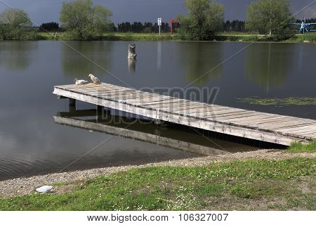 Pier with Muscovy duck on the lake.
