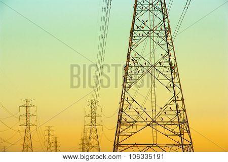 Bird On A High Voltage Power Pole