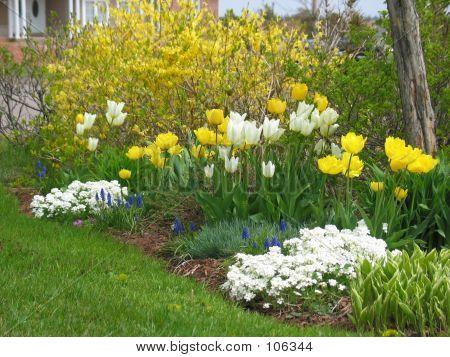 Spring Garden 2