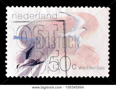 Netherlands 1982