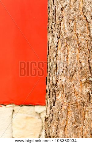 Pine Tree Trunk And Red Wall