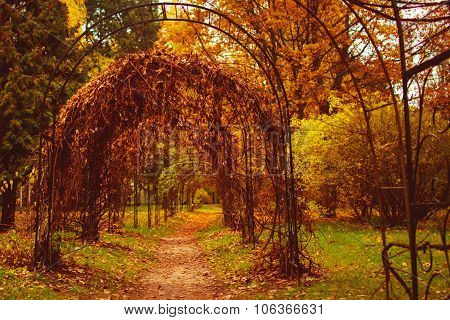 Autumn park with pergolas leaves