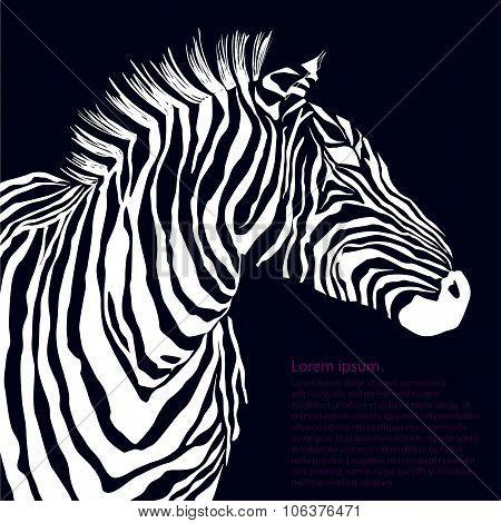 Animal white illustration silhouette zebra.
