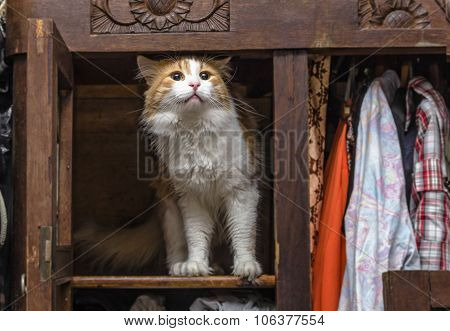 Cat In Closet