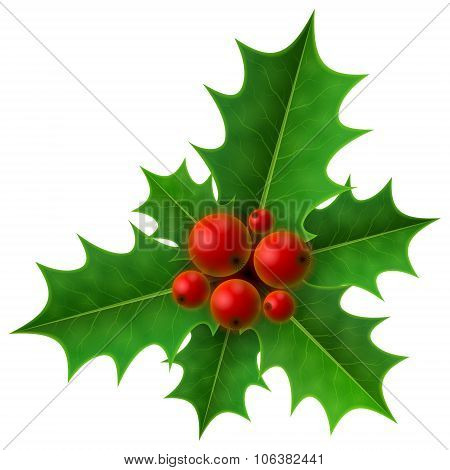 Christmas Holly Berry Isolated On White Background