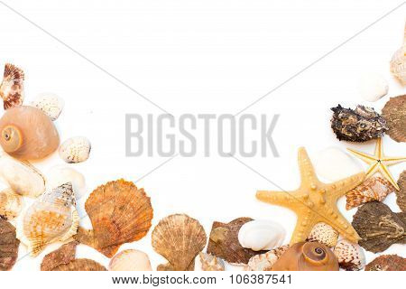 Seashells isolated on the white background