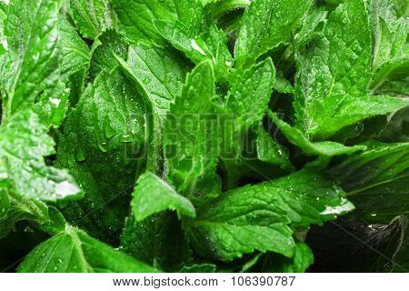 Fresh Mint Texture Background