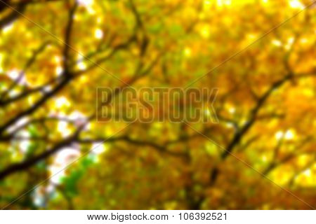 Abstract yellow treetop in autumn