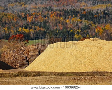 Wood Chips Logs Sawdust Autumn Forest
