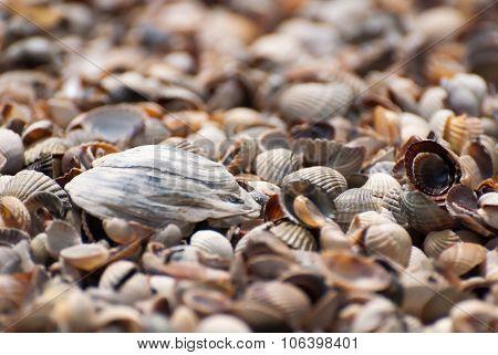 Seashells background, clouseup
