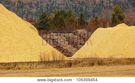 Wood Chips Sawdust Pile Logs