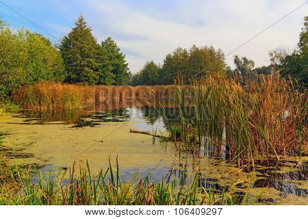 Autumn landscape with old bog
