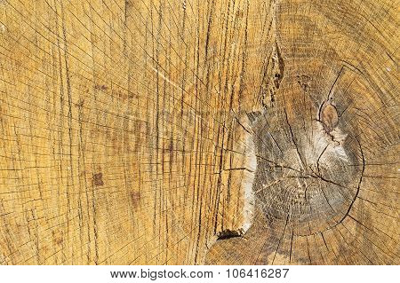 Tree Cut Structure