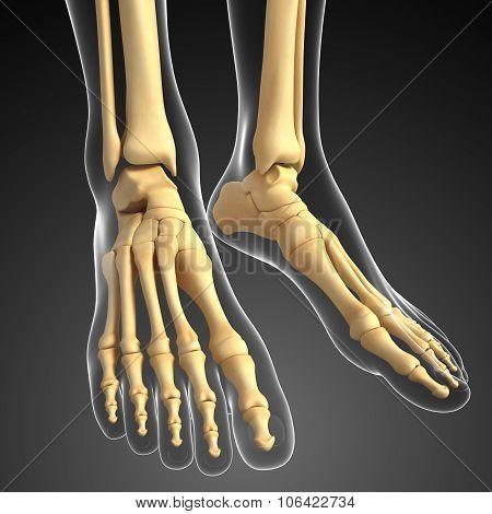 Human Foot Artwork