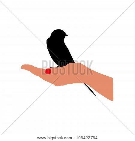 Sparrow In Hand Vector