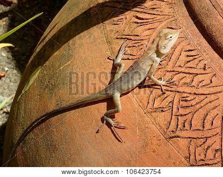 Desert lizard on amphora