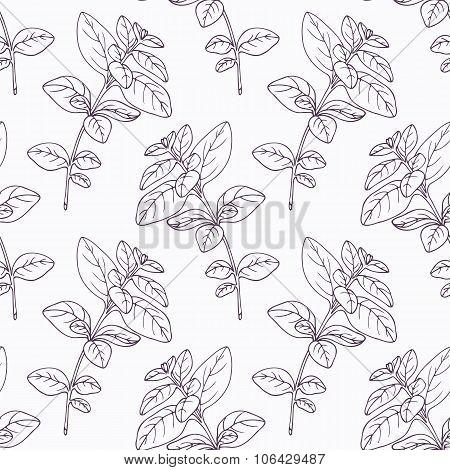 Hand drawn oregano branch outline seamless pattern