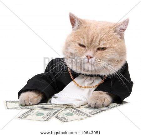 Red Cat Sitting On The Dollar,