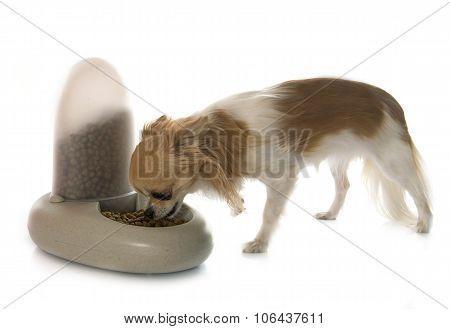 Pet Food Distributor