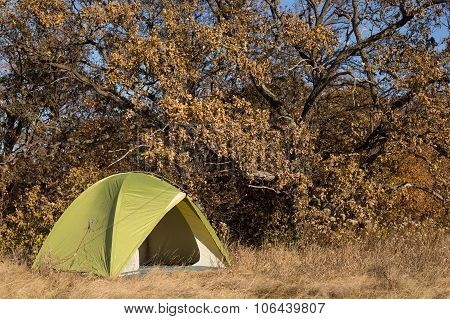 tents in the autumn forest on a hot sunny day