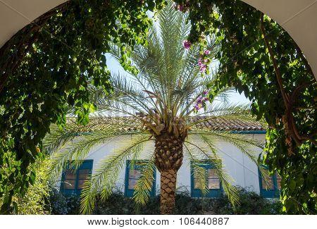 Gardens And Courtyards In Palacio De Viana Cordoba