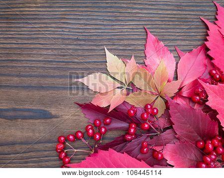 Red Viburnum Berries And Fall Leaves