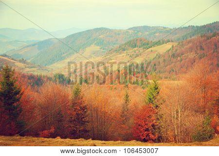 Autumn in Carpathian Mountains. Ukraine. Toned image