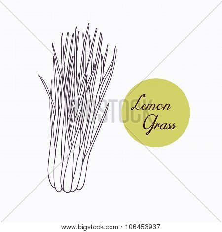 Hand drawn lemongrass branch with leaves isolated on white