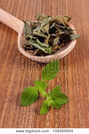 Fresh And Dried Lemon Balm With Spoon On Wooden Table, Herbalism