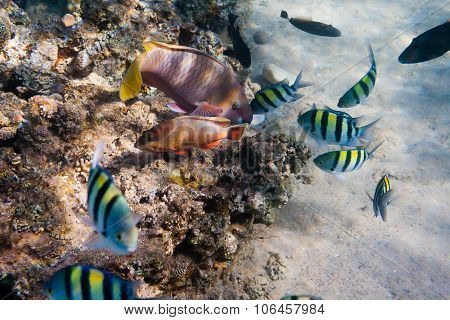 Underwater Life Of The Inhabitants Of The Red Sea