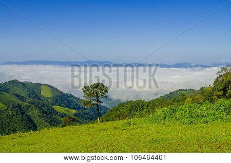 Morning mist in rainforest