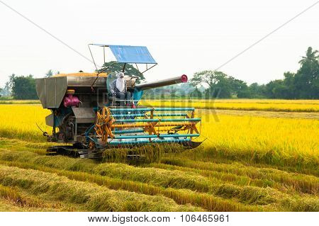 Harvest Car In The Rice Field
