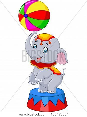 Circus elephant with a striped ball stands on a podium isolated on white background