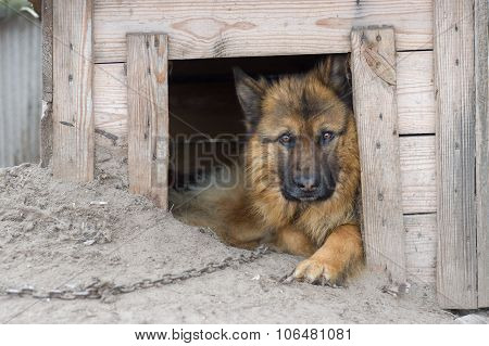 Cute country dog inside its kennel