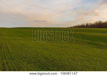 Ukrainian early spring landscape with winter crops