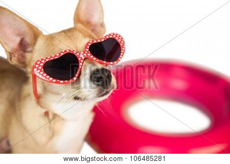 Cute dog with heart sunglasses on white background