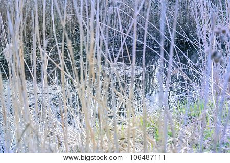 Water Through Dry Grass